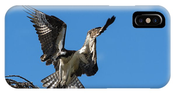 Ospreys iPhone Case - Returning To The Nest by Mike Dawson