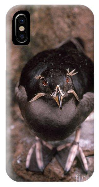 Auklets iPhone Case - Rhinoceros Auklet by Art Wolfe