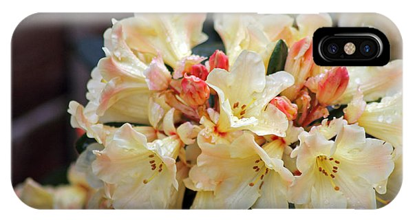 Rhododendron Nancy Evans IPhone Case