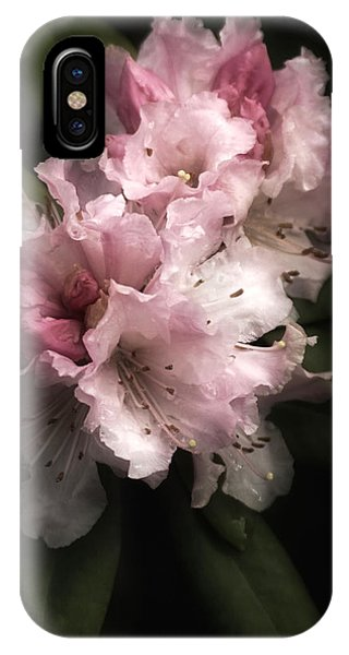 Rhododendron Study IPhone Case