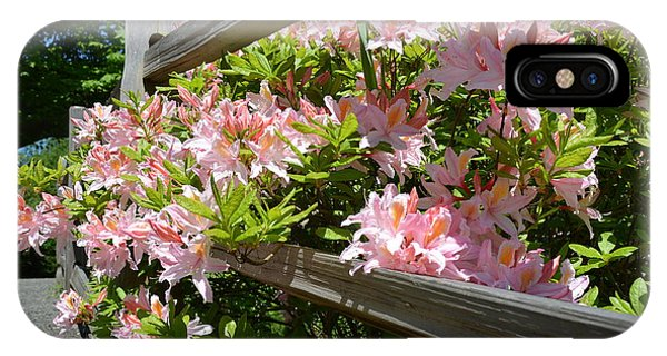 Rhododendrons In Tumwater Falls Park IPhone Case