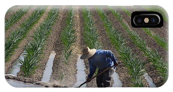 Rice Field In California IPhone Case