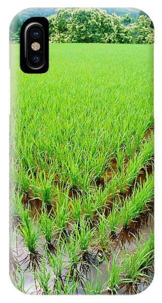 Rice Paddy IPhone Case