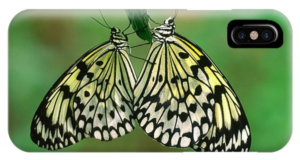 Behaviour iPhone Case - Rice Paper Butterflies Mating by Nigel Downer