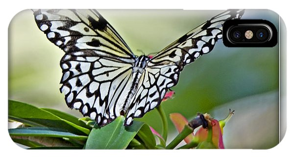 Rice Paper Butterfly 2b IPhone Case