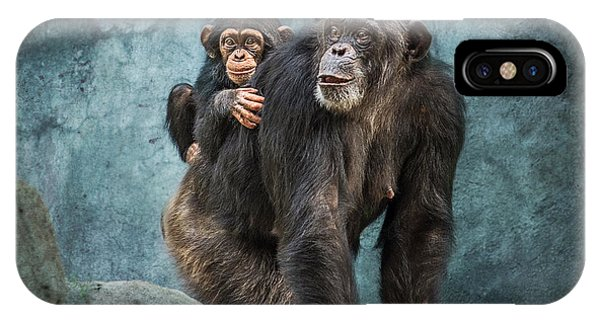 Chimpanzee iPhone Case - Ride Along by Jamie Pham