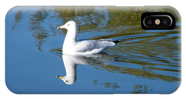 Ring-billed Gull IPhone Case