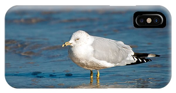 Wakulla iPhone Case - Ring-billed Gull by Rich Leighton