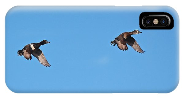 Ring-necked Duck Pair IPhone Case