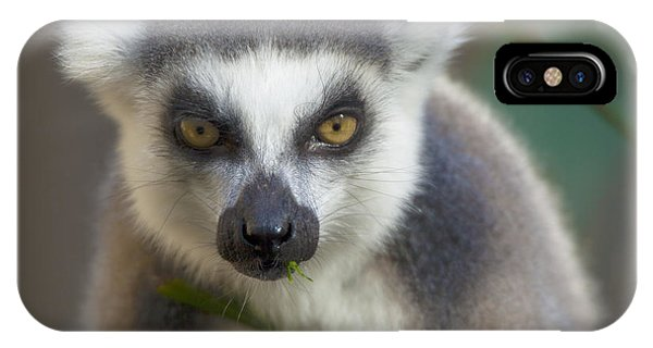 Ring Tailed Lemur IPhone Case