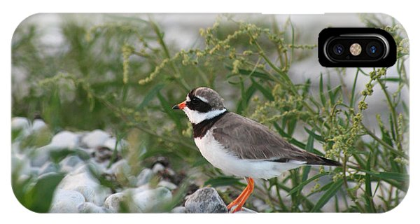 Ringed Plover On Rocky Shore IPhone Case