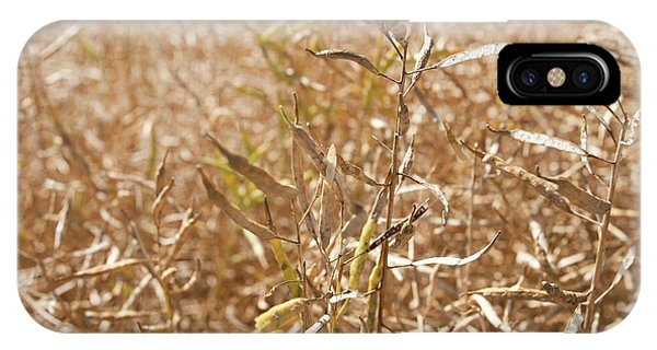 Ripe Rapeseed Crop Phone Case by Lewis Houghton/science Photo Library