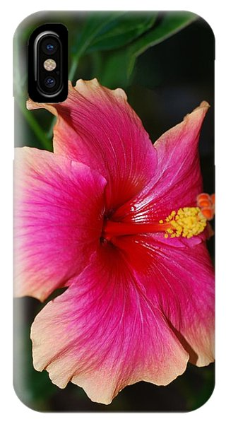 Rise And Shine - Hibiscus Face IPhone Case