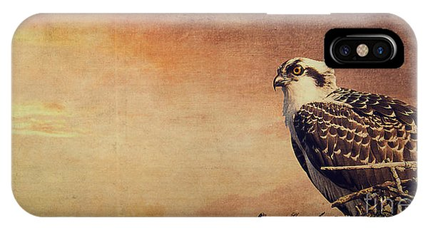 Ospreys iPhone Case - Rising Sun by Edward Fielding