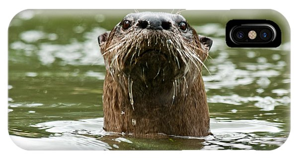 River Otter 1 IPhone Case
