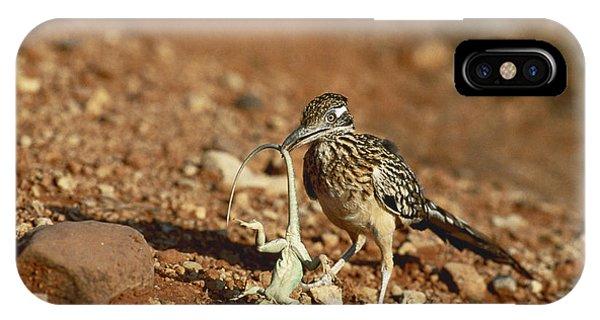 Greater Roadrunner iPhone Case - Roadrunner With Lizard by Wyman Meinzer/Okapia