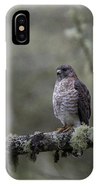 Roadside Hawk On Lichen-covered Branch 1 IPhone Case