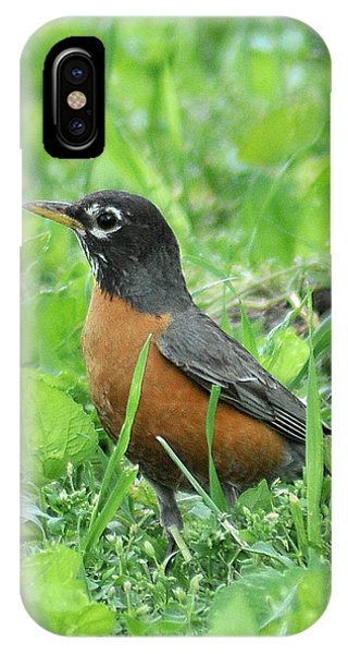 Robin 370 IPhone Case