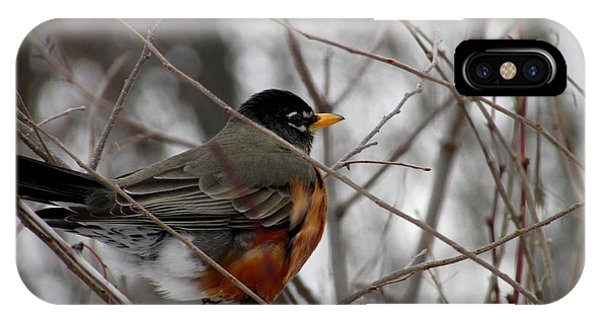Robin Awaiting Spring IPhone Case