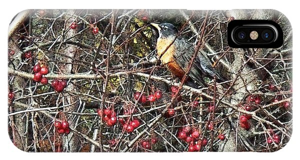 Robin In The Crab Apple Trees IPhone Case