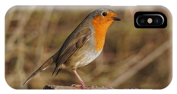 IPhone Case featuring the photograph Robin On A Log -2 by Paul Gulliver