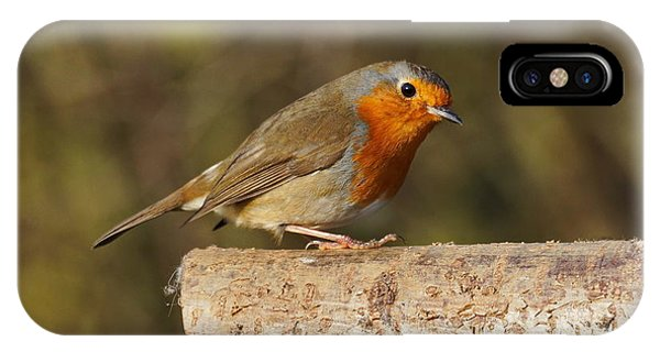 Robin On A Log IPhone Case
