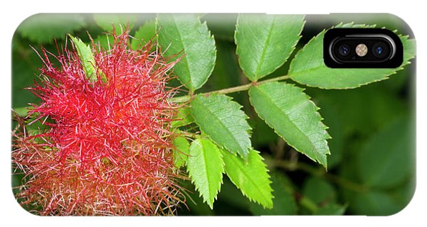 Robin's Pincushion Gall Or Bedeguar Gall Phone Case by Nigel Downer
