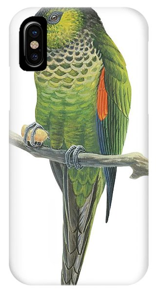 Rock Parakeet IPhone Case