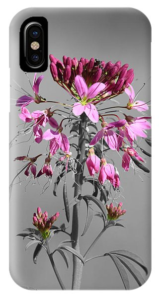 Rocky Mountain Bee Plant Sc IPhone Case