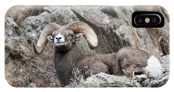 Rocky Mountain Bighorn Sheep iPhone Case - Rocky Mountain Big Horn Ram On Watch II by Gary Langley