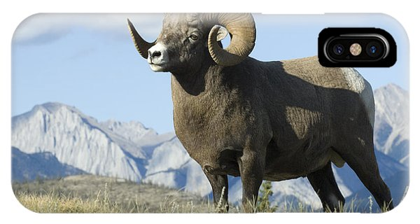 Rocky Mountain Big Horn Sheep IPhone Case