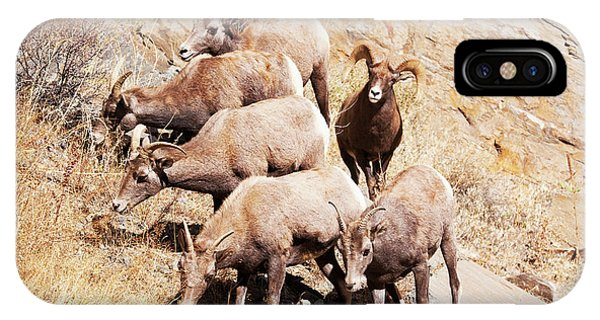 Rocky Mountain Bighorn Sheep iPhone Case - Rocky Mountain Bighorn Sheep Herd by Piperanne Worcester