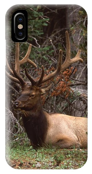Rocky Mountain Bull Elk Phone Case by T C Brown