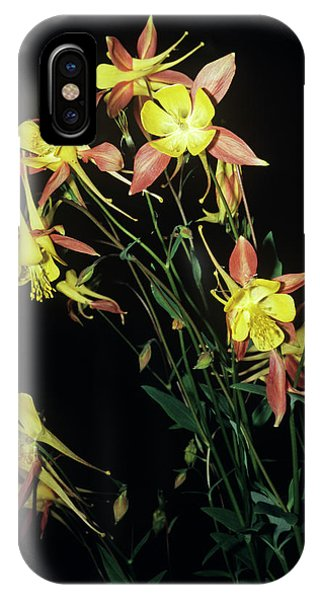 Rocky Mountain Columbine Flowers Phone Case by Brian Gadsby/science Photo Library