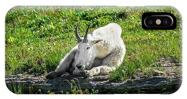 Rocky Mountain Np iPhone Case - Rocky Mountain Goat Glacier National Park   by Rich Franco