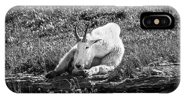 Rocky Mountain Np iPhone Case - Rocky Mountain Goat Glacier National Park Bw  by Rich Franco