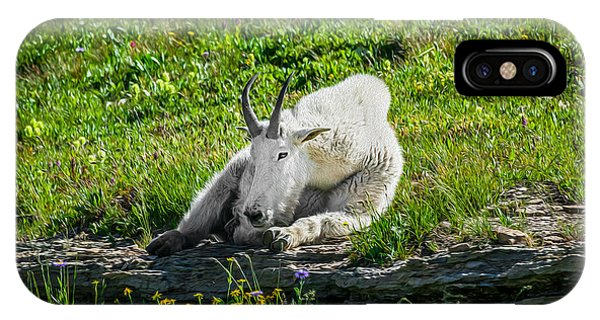 Rocky Mountain Np iPhone Case - Rocky Mountain Goat Glacier National Park Painted  by Rich Franco
