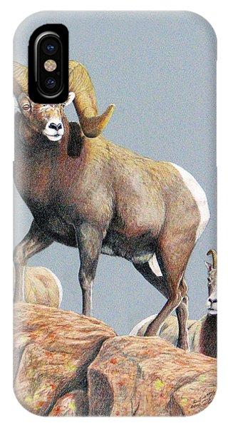Rocky Mountain Ram Ewe And Lamb IPhone Case