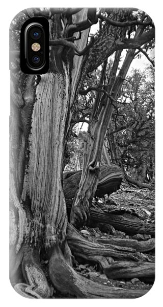 Roots Of The Bristlecone IPhone Case