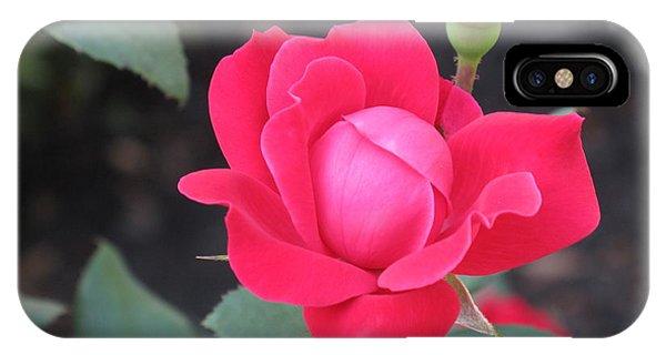 Ro's Last Rose Of Summer IPhone Case