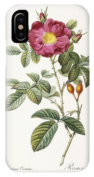 Rosa Damascena Coccina IPhone Case