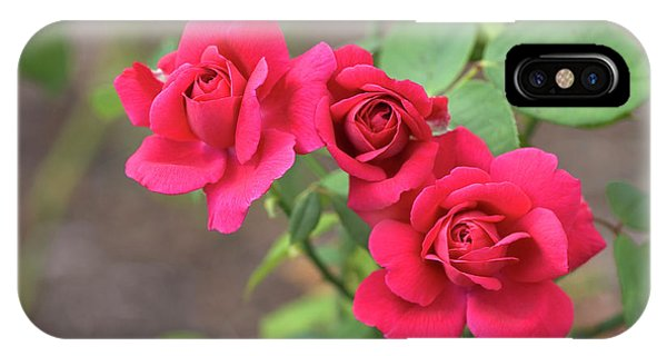 Hybrid iPhone Case - Rosa 'souvenir De Therese Levet' by Brian Gadsby/science Photo Library