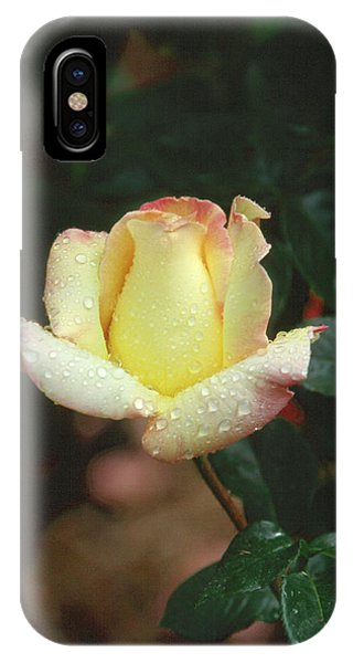 Rose 3 IPhone Case
