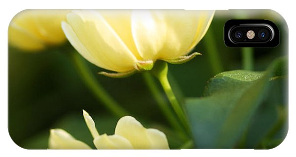 Rose 6 IPhone Case