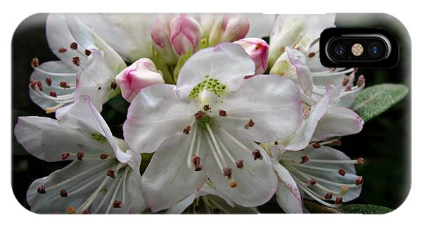 Rose Bay Rhododendron IPhone Case