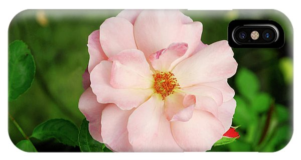 Botticelli iPhone Case - Rose 'botticelli' by Brian Gadsby/science Photo Library