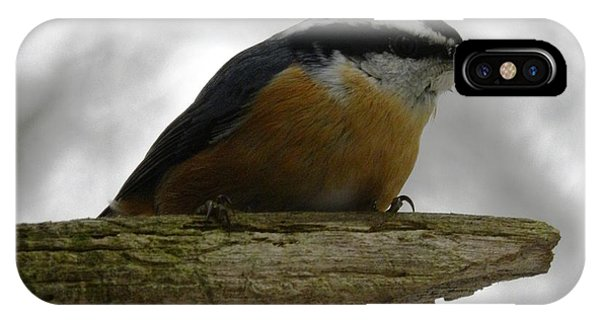 Rose Breasted Nuthatch IPhone Case