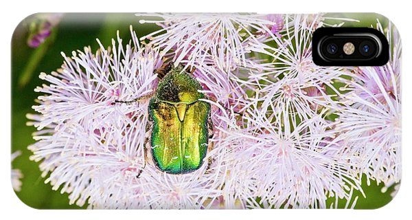 Coleoptera iPhone Case - Rose Chafer On Meadow-rue Flowers by Bob Gibbons