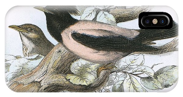 Rose Coloured Starling IPhone Case