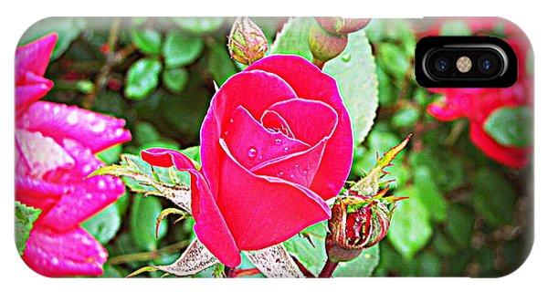 Rose Garden Centerpiece 2 IPhone Case